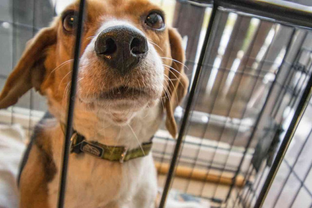Dog crate training - dog in crate