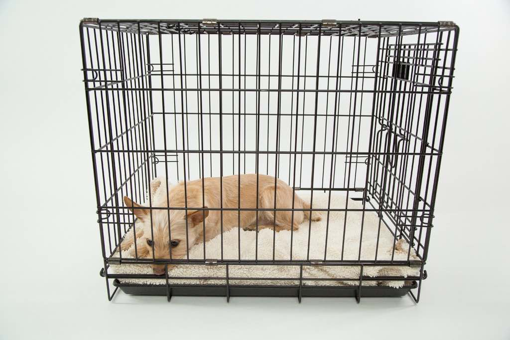 dog crate sizing chart - example of proper size